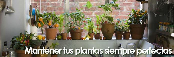 consejos para tus plantas