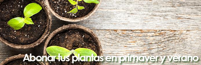 consejos abono plantas
