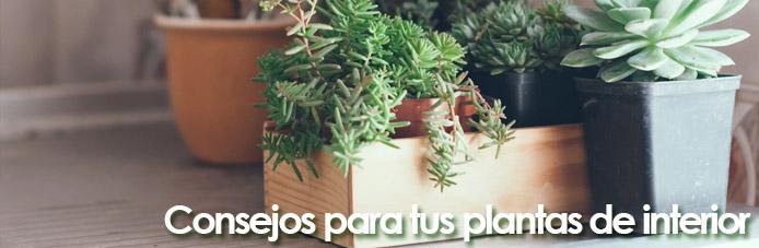 consejos plantas de interior