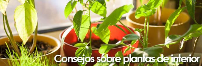 consejos de plantas de interior