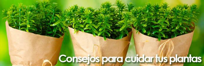 cuidados para tus plantas