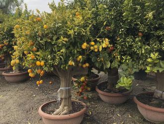 vivero arboles frutales madrid