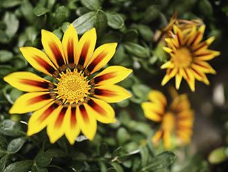 vivero de flores de temporada