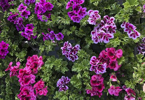 vivero flor de temporada