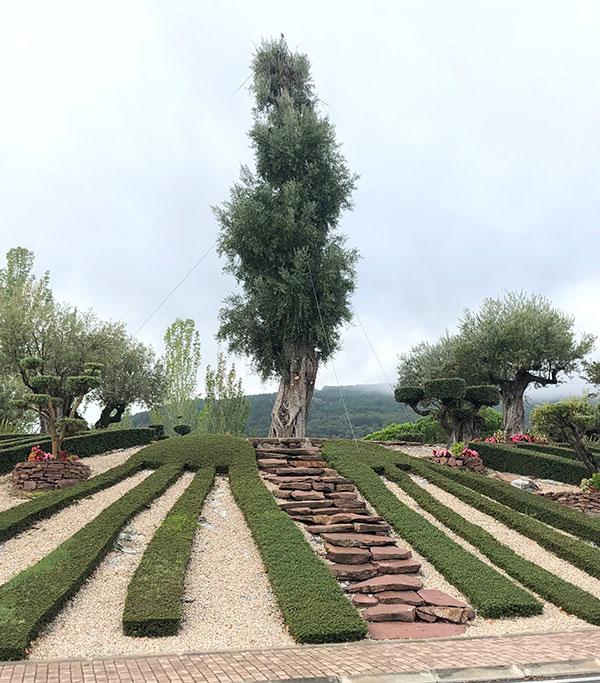 Venta de olivos monumentales